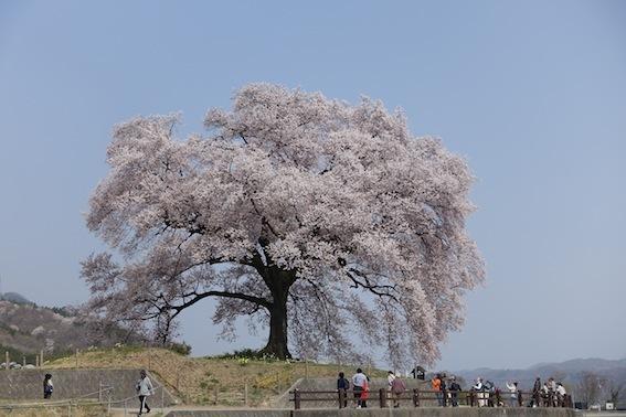 山梨の桜_f0230689_11261191.jpg