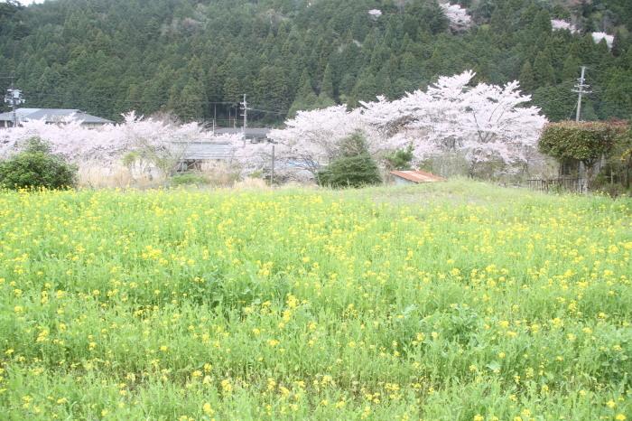 京都 大原観光 三千院_c0100195_06541594.jpg