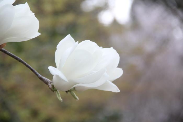 京都 大原観光 三千院_c0100195_07243672.jpg