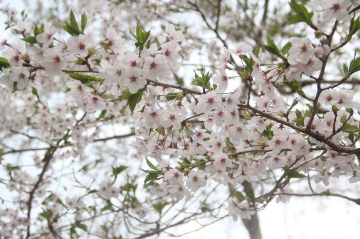 京都 大原観光 三千院_c0100195_07254032.jpg