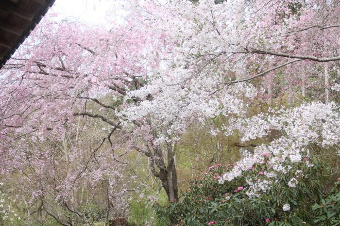 京都 大原観光 三千院_c0100195_07264693.jpg