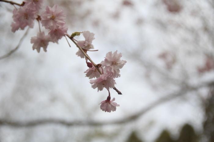 京都 大原観光 三千院_c0100195_07271877.jpg