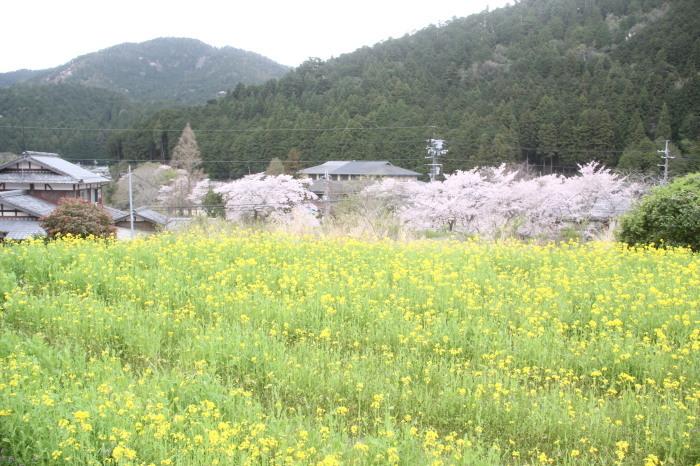 京都 大原観光 三千院_c0100195_07280807.jpg