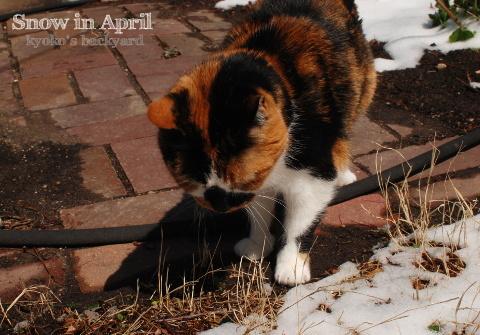 4月の雪とWhitney_b0253205_03491079.jpg