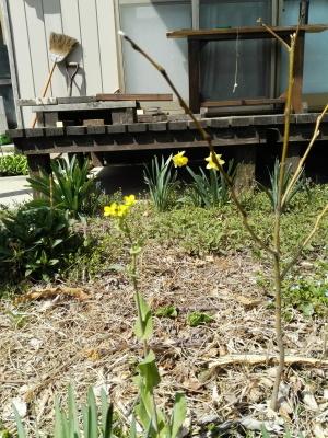 黄色い花_c0289116_21231674.jpg