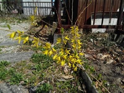 黄色い花_c0289116_21235218.jpg