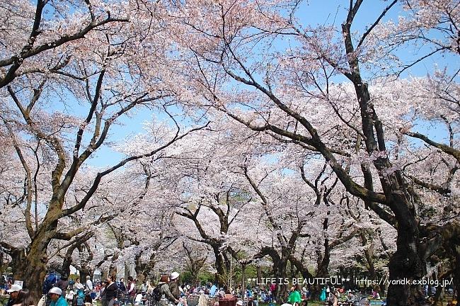 お花見@小金井公園*2018_d0083623_21152798.jpg