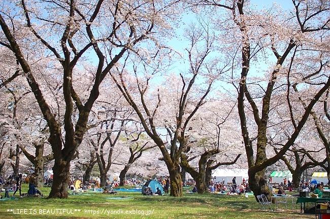 お花見@小金井公園*2018_d0083623_21153935.jpg