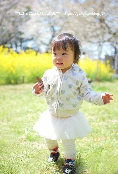 お花見@小金井公園*2018_d0083623_21232250.jpg