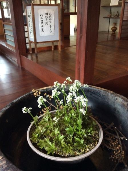 「芭蕉の舘」の草花⑴_f0289632_11004061.jpg