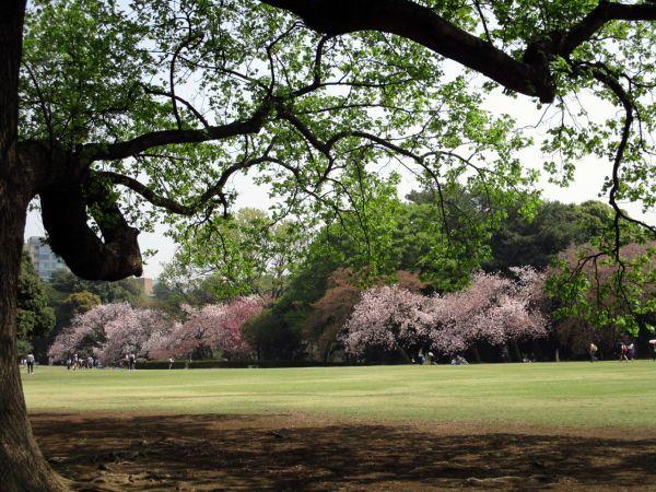 春の新宿御苑で桂の木をみつけた!_d0145934_18252763.jpg