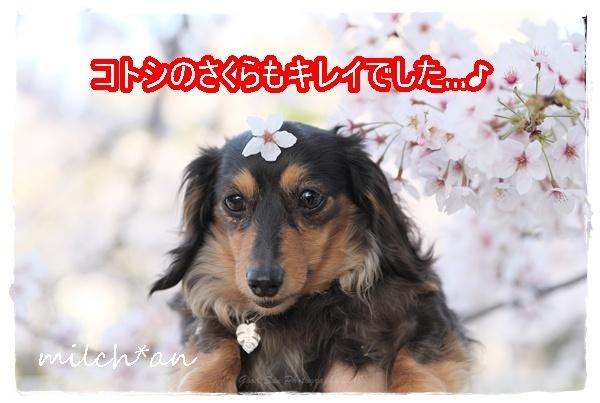 b0115642_19450071.jpg