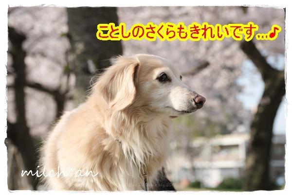 b0115642_19450361.jpg
