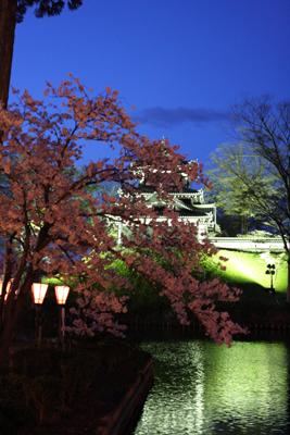 上越高田公園の夜桜_a0303951_13532974.jpg