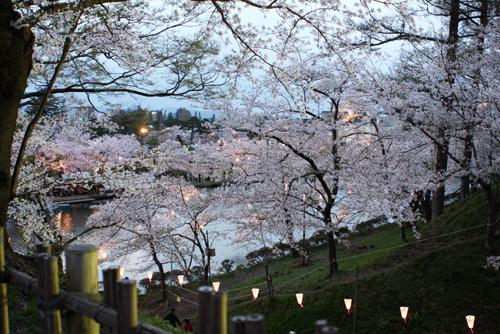 上越高田公園の夜桜_a0303951_13583068.jpg