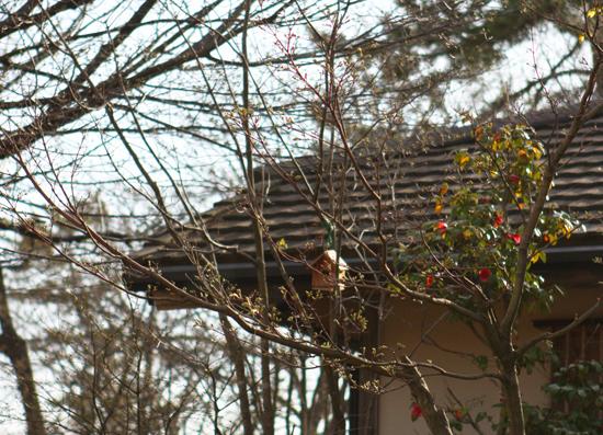 桜の季節に 樹下美術館_a0303951_18272031.jpg