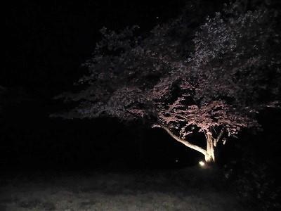 夜桜_d0134352_23380291.jpg