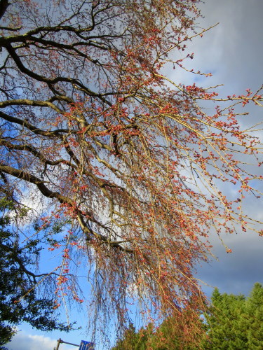 4月8日*軽井沢の桜 ~ 春限定*いちごかもめの玉子_f0236260_18223591.jpg