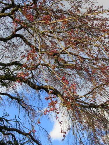 4月8日*軽井沢の桜 ~ 春限定*いちごかもめの玉子_f0236260_18225782.jpg