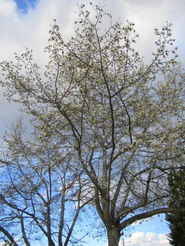 4月8日*軽井沢の桜 ~ 春限定*いちごかもめの玉子_f0236260_18232953.jpg