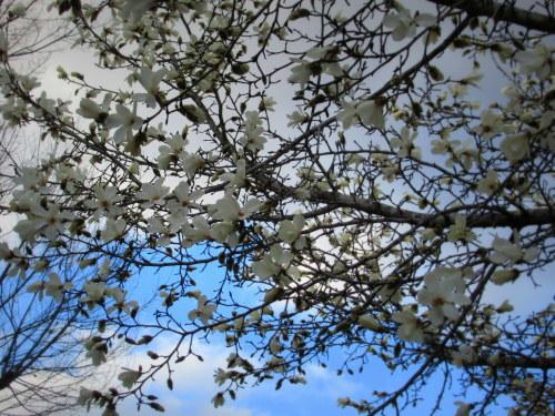 4月8日*軽井沢の桜 ~ 春限定*いちごかもめの玉子_f0236260_18240452.jpg