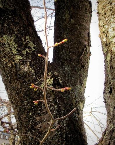 4月8日*軽井沢の桜 ~ 春限定*いちごかもめの玉子_f0236260_19324473.jpg