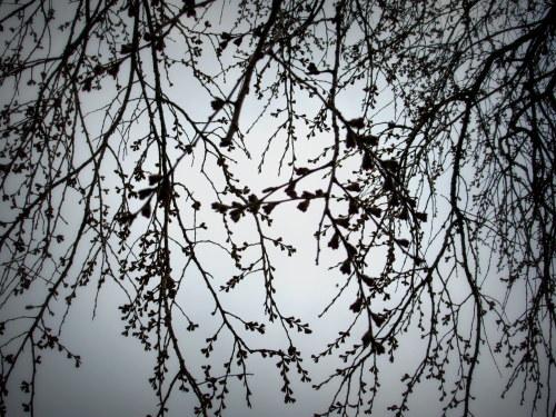 4月8日*軽井沢の桜 ~ 春限定*いちごかもめの玉子_f0236260_19381775.jpg