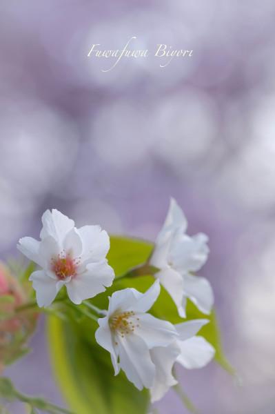 公園のお花たち **_d0344864_20294815.jpg