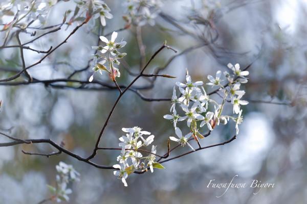 公園のお花たち **_d0344864_20300048.jpg