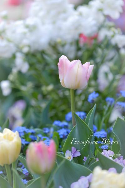 公園のお花たち **_d0344864_20300466.jpg