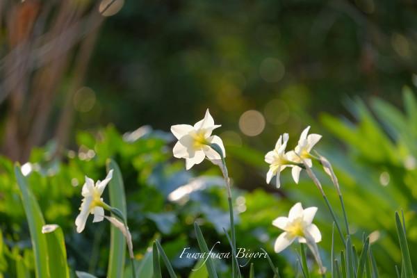 公園のお花たち **_d0344864_20300862.jpg