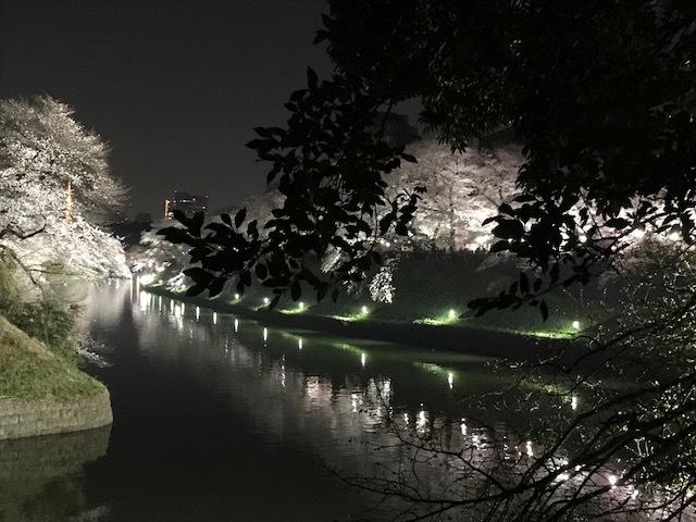 2018年の桜(1)_b0129897_13231711.jpg