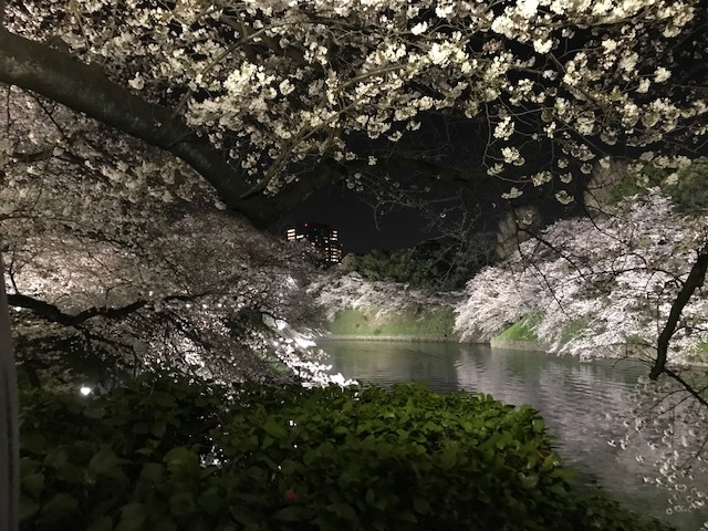 2018年の桜(1)_b0129897_13232595.jpg