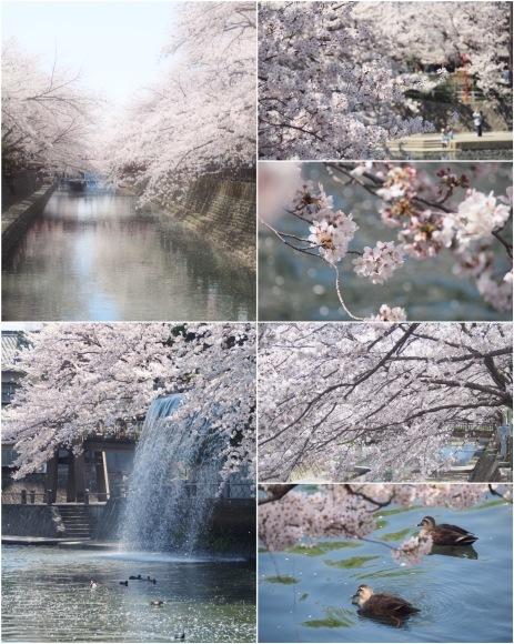桜も終わり、荷物も届いて_d0252505_09301879.jpeg