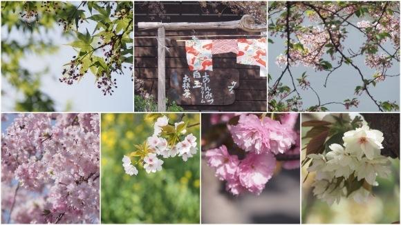 桜も終わり、荷物も届いて_d0252505_09304224.jpeg