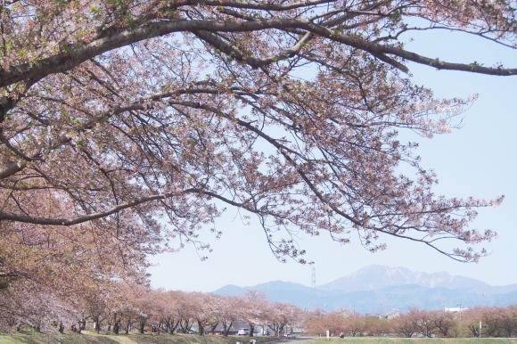 桜も終わり、荷物も届いて_d0252505_09312829.jpeg