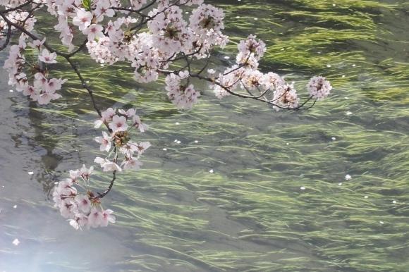 桜も終わり、荷物も届いて_d0252505_09324343.jpeg
