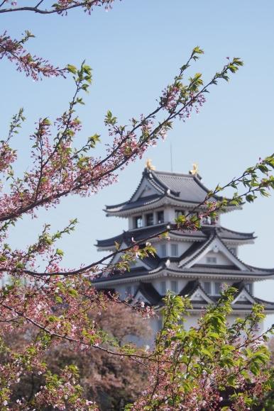 桜も終わり、荷物も届いて_d0252505_09333304.jpeg