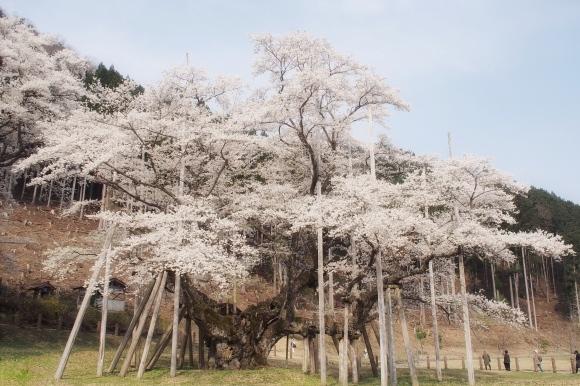 桜も終わり、荷物も届いて_d0252505_09354885.jpeg