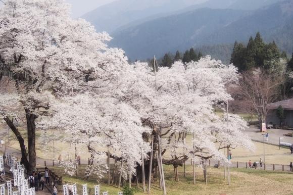 桜も終わり、荷物も届いて_d0252505_09364981.jpeg