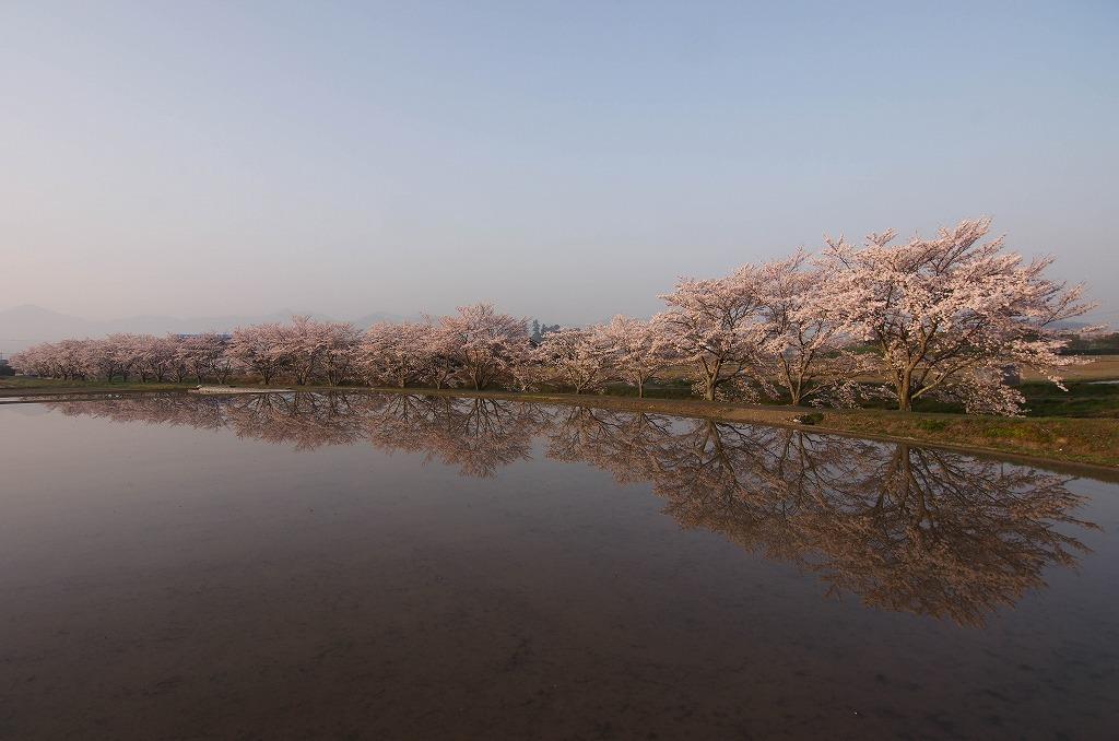 いつもの桜並木 2018_c0106831_23102337.jpg