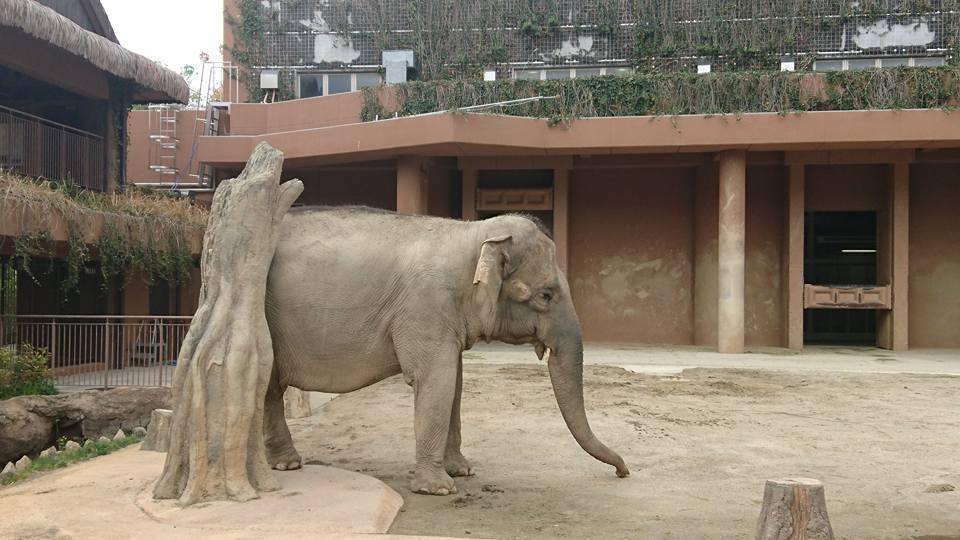 土曜日は東山動植物園へ!_f0373339_14323432.jpg