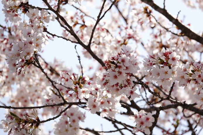 下妻の春_d0149245_21181219.jpg