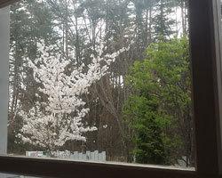 桜は咲きましたが、、、、_d0050155_09061492.jpg