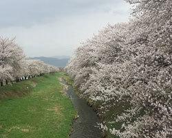 桜は咲きましたが、、、、_d0050155_09061872.jpg