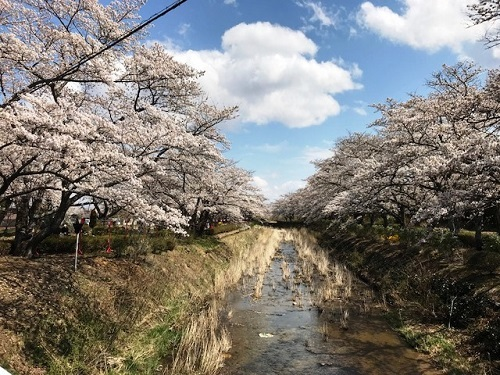 2018年春「桜」_e0211357_16031128.jpg