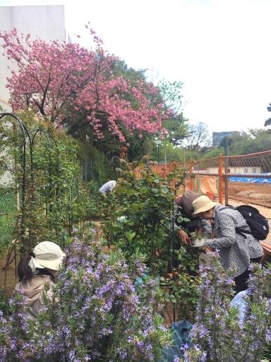 2018年4月月例会「バラの芽かき、除草、、足場レンガの補修」_a0094959_15255926.jpg