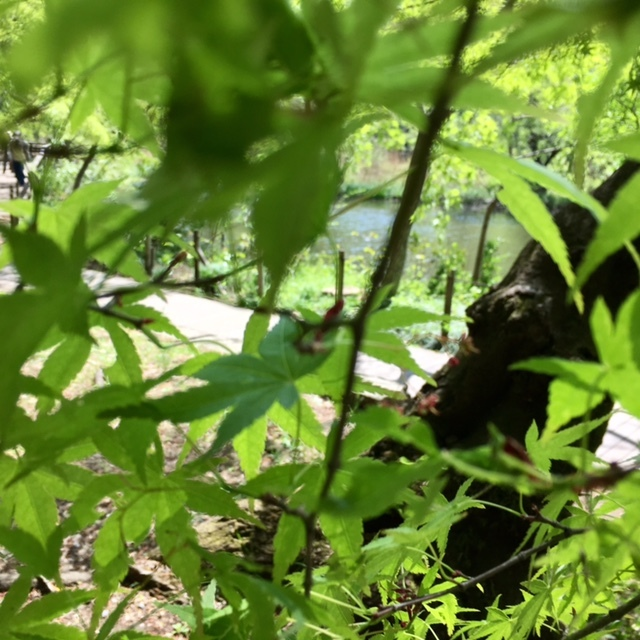 picnic  眩しい緑と春の花々に癒されて_a0165160_21164629.jpg