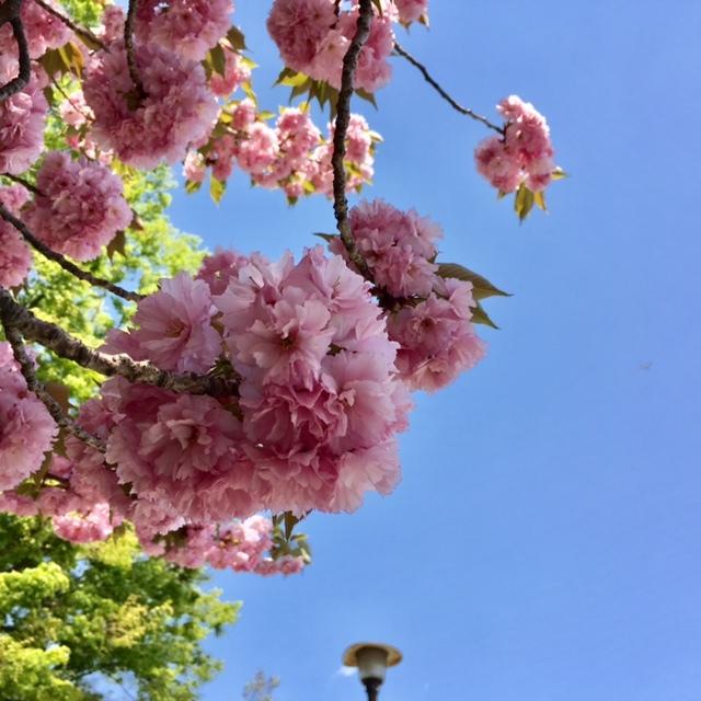 picnic  眩しい緑と春の花々に癒されて_a0165160_21381882.jpg
