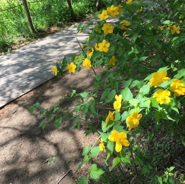picnic  眩しい緑と春の花々に癒されて_a0165160_21392538.jpg